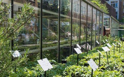 Un nouveau service bruxellois d'information et d'accompagnement en agriculture urbaine