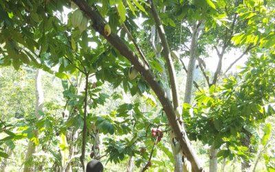 L'entrepreneuriat en Haïti